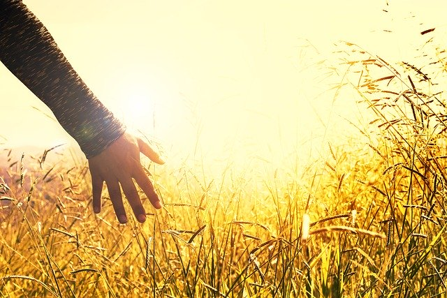 Sun reflecting through woman's hand in the grass