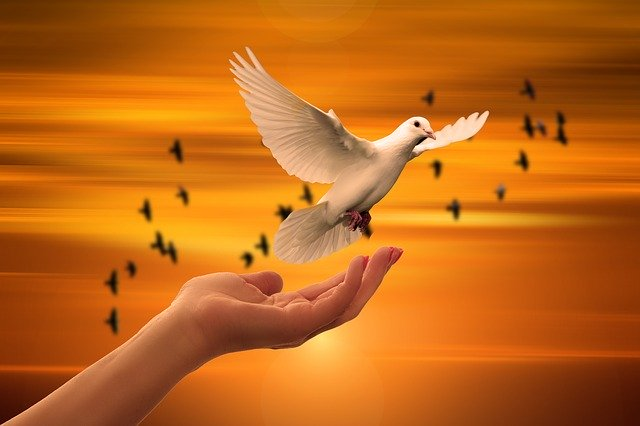 sunset with hand releasing a dove with birds in the background