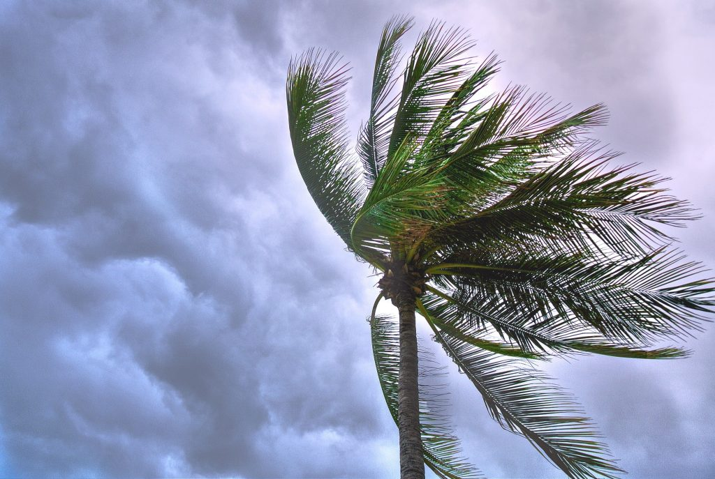 palm tree with clouds in background