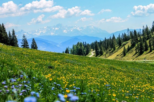 flower filled meadow at mountain side to deal with grief