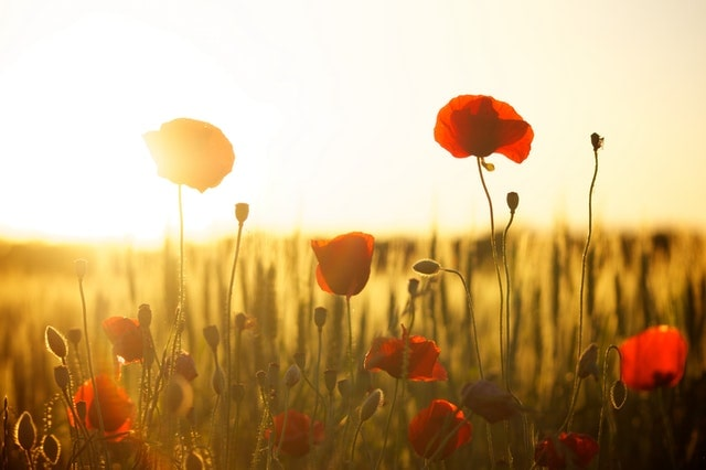 Meadow at sunrise with flowers