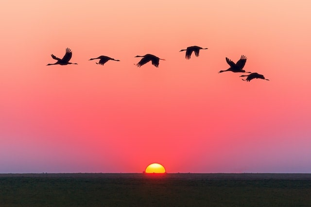 Sunrise with birds flying over