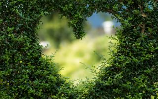 heart shape in green bushes